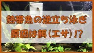 熱帯魚の逆立ち泳ぎの原因と対策