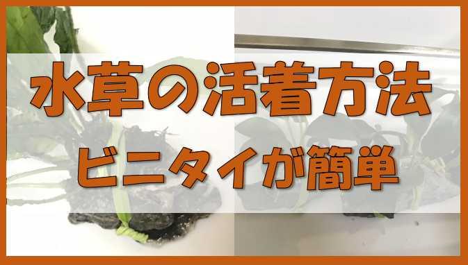水草の活着方法